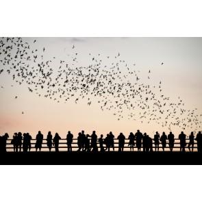 Kuşlar ve İnsanlar 3 Boyutlu Duvar Kağıdı Önizleme