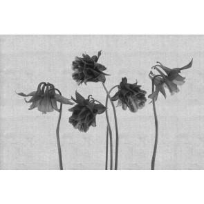Çiçek Sanatı 3 Boyutlu Resimli Duvar Kağıdı