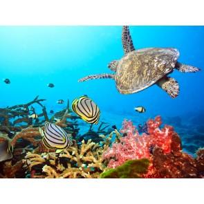 Yüzen Kaplumbağalar Duvar Kağıdı