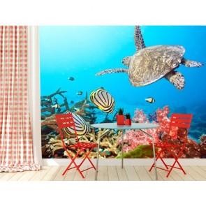 Yüzen Kaplumbağalar