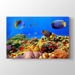 Renkli Balıklar - Vahşi Yaşam Duvar Dekoru Kanvas Tablo