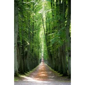 Gizli Orman Yolu 3 Boyutlu Duvar Kağıdı