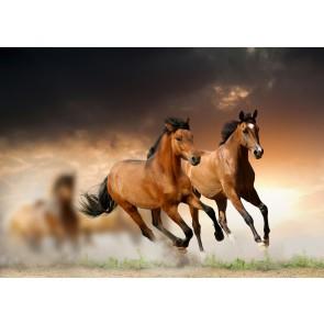 Dört Nala 3 Boyutlu At Resimli Duvar Kağıdı Önizleme
