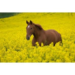 Özgürlük Koşusu 3 Boyutlu At Resimli Duvar Kağıdı Önizleme