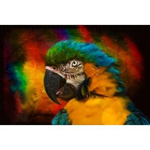 Hırçın Papağan 3 Boyutlu Resimli Duvar Kağıdı Önizleme