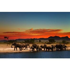 Filler Molada Duvar Kağıdı