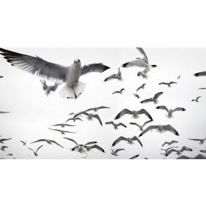 Beyaz Kuşlar Duvar Kağıdı
