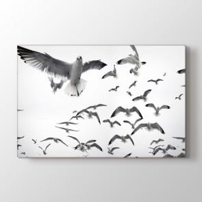 Beyaz Kuşlar - Siyah Beyaz Duvar Dekor Kanvas Tablo