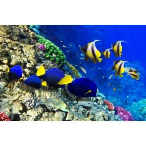 Sarı Lacivert Balıklar - Üç Boyutlu Duvar Kağıtları