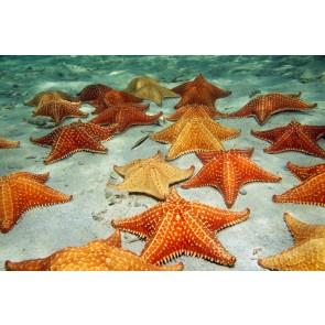Deniz Yıldızı - Resimli İthal Duvar Kağıtları