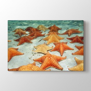 Deniz Yıldızı - Vahşi Yaşam Duvar Tablosu Modeli
