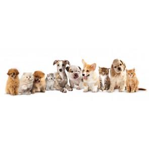 Kediler ve Köpekler - Resimli Dekoratif Duvar Kağıdı