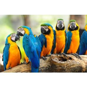 Sarı Lacivert Papağanlar - Üç Boyutlu Duvar Kağıtları