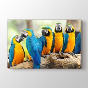 Sarı Lacivert Papağanlar - Vahşi Yaşam Dekoratif Duvar Tablosu