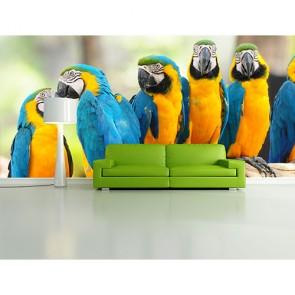Sarı Lacivert Papağanlar