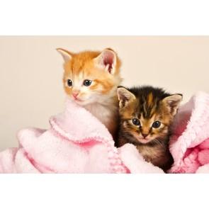 Kedi Yavruları - Resimli Dekoratif Duvar Kağıdı