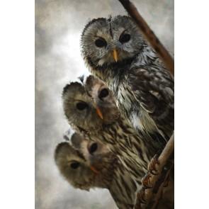 Üç Baykuş - Manzaralı Yapışkan Duvar Kağıdı