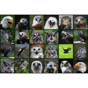 Kuş Dili - Duvar Sticker ve Duvar Resimleri