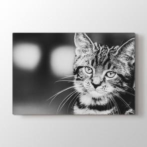 Tatlı Kedi Tablosu | At Tabloları