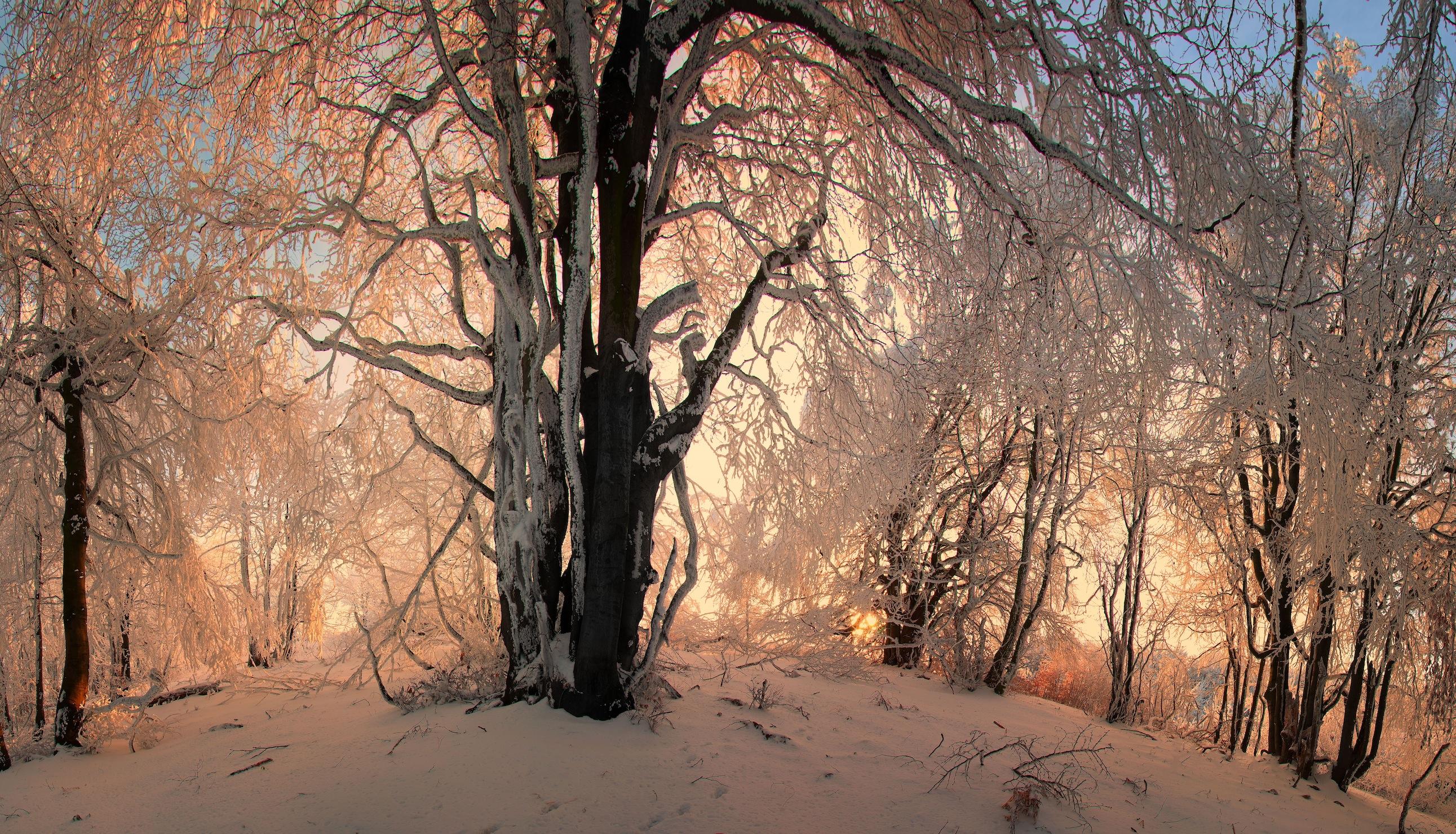 Kış Tepesi 3 Boyutlu Kış Manzaralı Duvar Kağıdı Önizleme