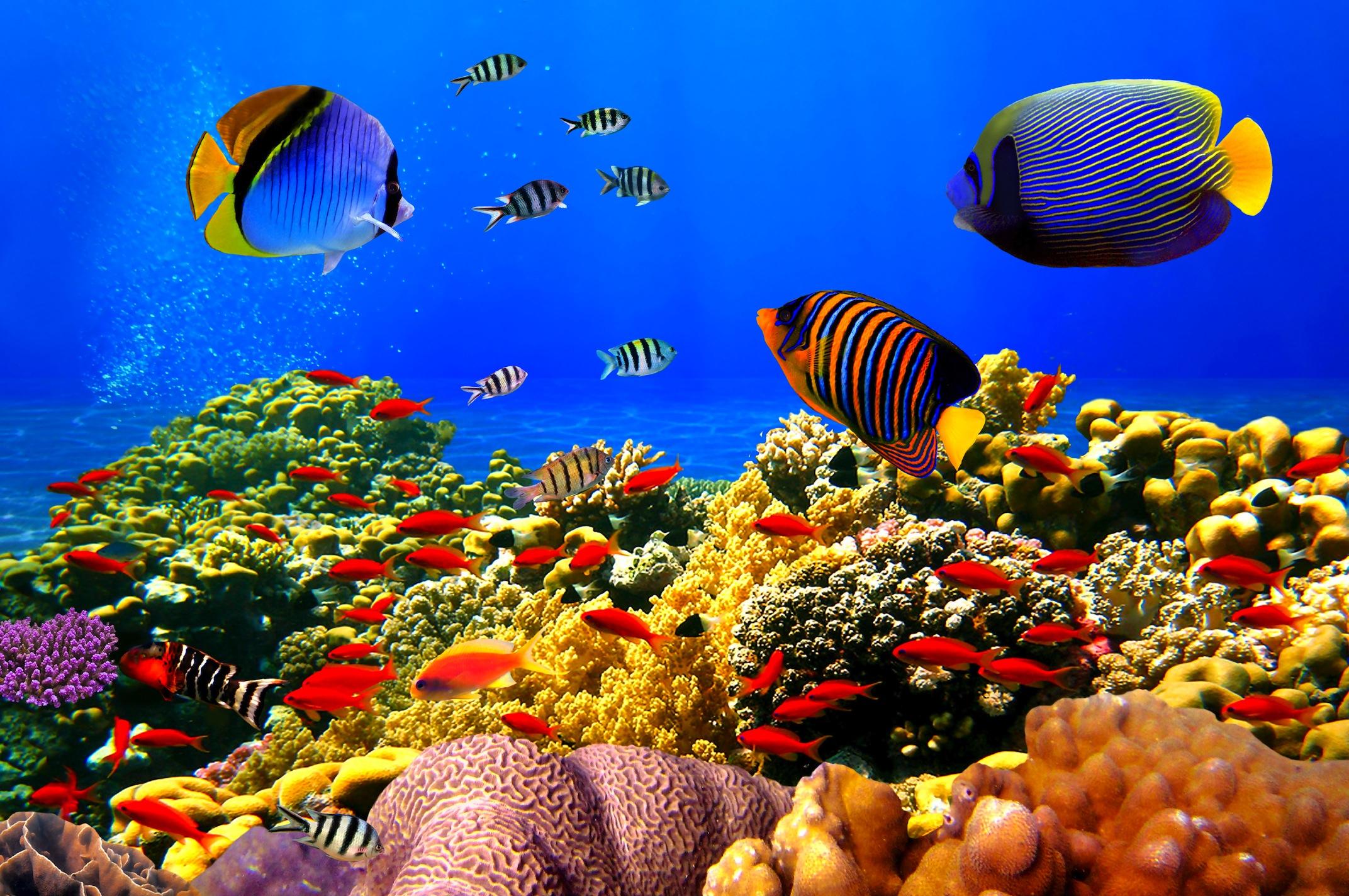 Renkli Balıklar 3 Boyutlu Akvaryum Duvar Kağıdı Önizleme
