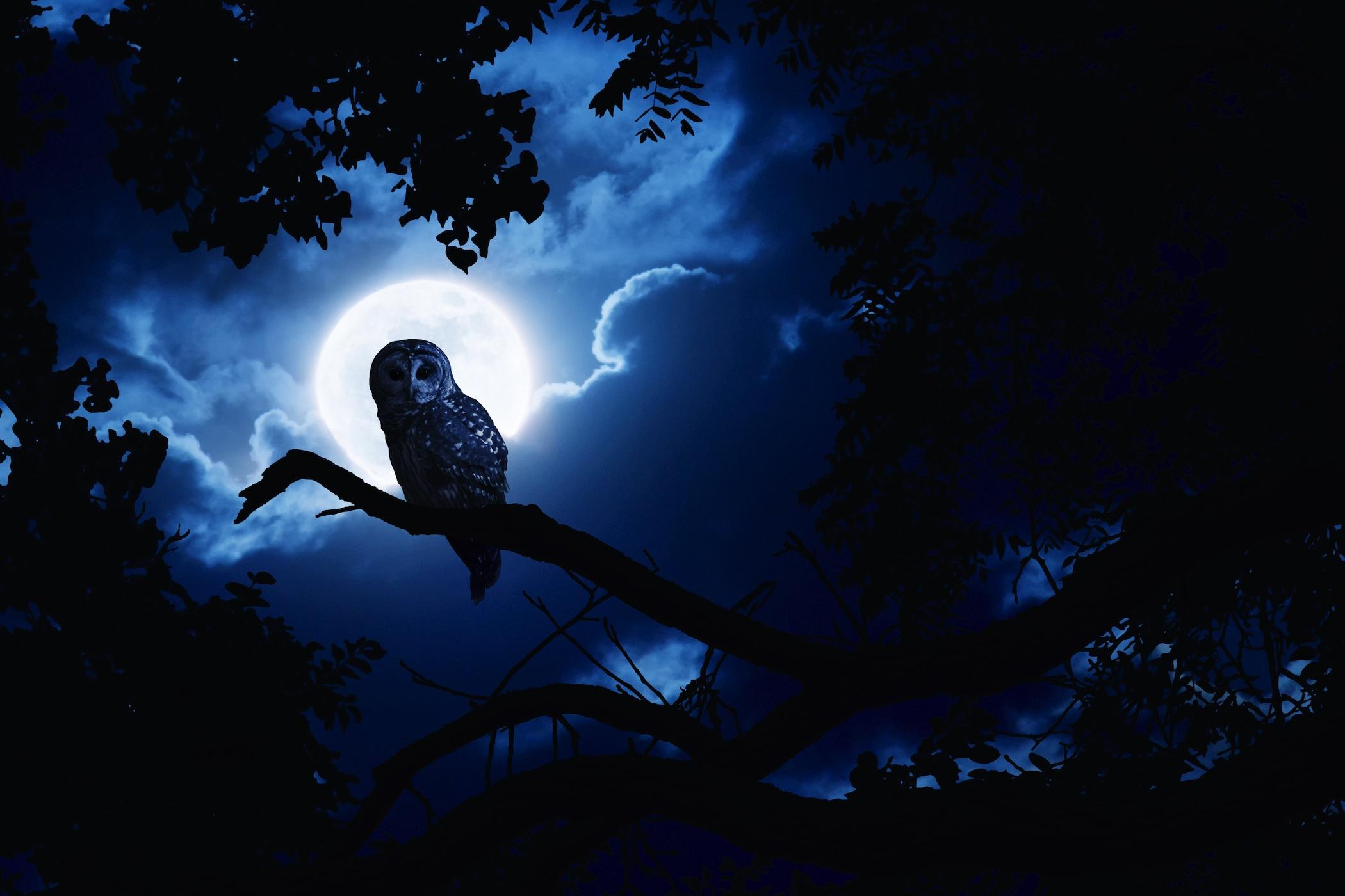 Секс по тихому в лунную ночь 27 фотография
