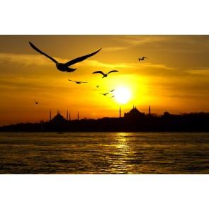 İstanbul Martıları
