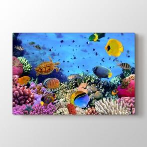 Akvaryum - Vahşi Yaşam Resimli Tablo Modeli