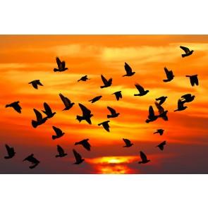 Kuşlar Sonbaharda Gelir