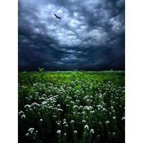 Kartallar Yalnız Uçar