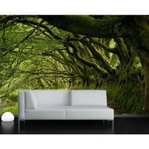 Ağaçların Arasından Duvar Kağıdı