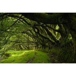 Ağaçların Arasından