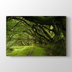 Ağaçların Arasından - Doğa Manzara Duvar Dekor Kanvas Tablo