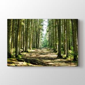 Ağaçların İçinden - Doğa Manzara Duvar Dekor Kanvas Tablo