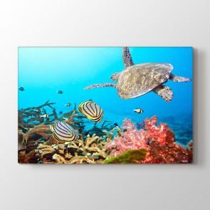 Yüzen Kaplumbağa - Vahşi Yaşam Duvar Tablosu