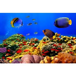 Renkli Balıklar