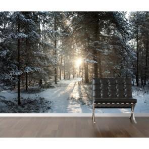 Kış Güneşi Duvar Kağıdı Önizleme
