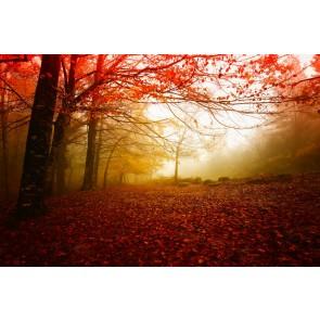 Sonbahar Kırmızısı