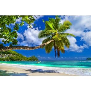 Deniz ve Palmiyeler