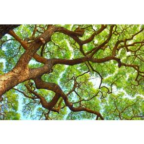 Yüksek Ağaç