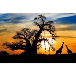 Güneş Batarken Safari