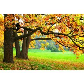 Sonbaharın Güzelliği