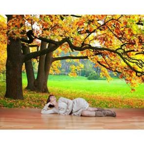 Sonbaharın Güzelliği Duvar Kağıdı Önizleme