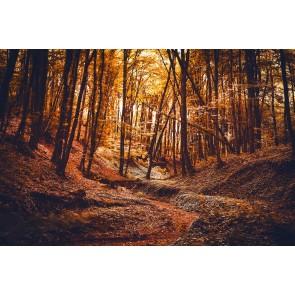 Sherwood Ormanı