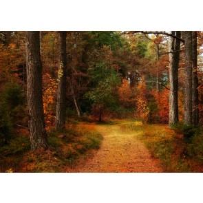 Karlı Kayın Ormanı