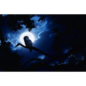Gece Baykuşu