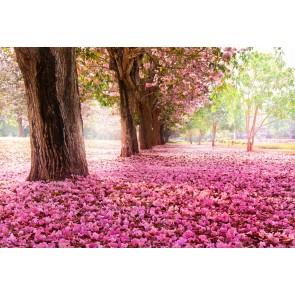 Kiraz Ağacı Yaprakları