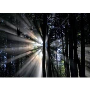 Gece Görüşü Orman