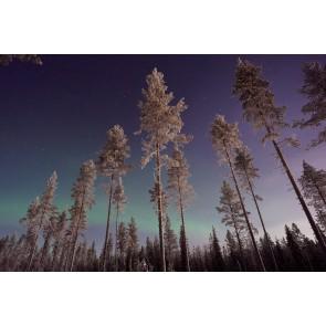 Gökyüzüne Değen Ağaçlar