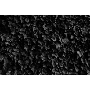 Kara Yapraklar 3 Boyutlu Duvar Kağıdı